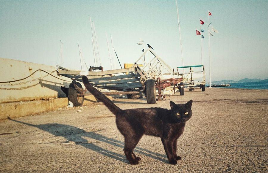 Cat Relaxing Eyem Eyem Best Shots Istanbuldayasam Nature VSCO Swimming