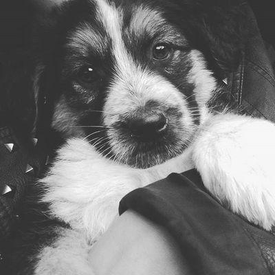 Dog Dog❤ Dogslife Puppy