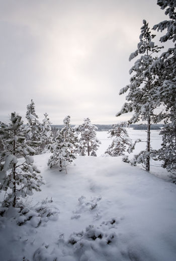 Winter view with snow covered trees at evening light in Finland Cloudy Evening Light Finland Moment Of Silence Pine Snow ❄ Atmospheric Mood Beauty In Nature Cold Temperature Forest Landscape Nature No People Outdoors Scenics Sky Snow Snow Covered Tranquil Scene Tranquility Tree Winter