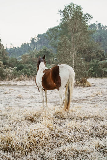 Horse standing in ranch