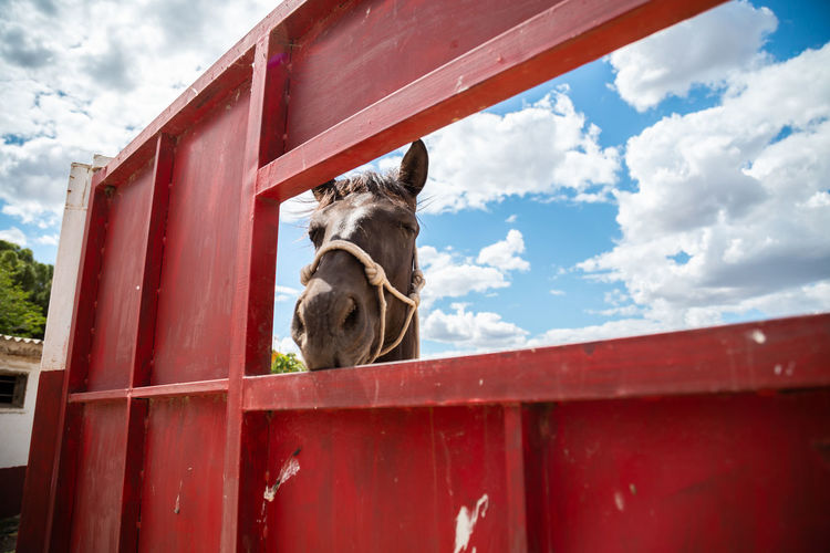 View of a horse against the sky