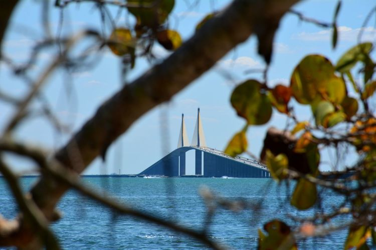 Sunshine Skyway Bridge, Interstate 275, Tampa Bay area Florida through the Seagrapes Seagrapes Bridge - Man Made Structure Bridge Architecture Focus On Background Travel Destinations No People Travel Built Structure Water Tampa Bay Florida Sunshine Skyway Bridge Connection Transportation Mode Of Transport Scenics Outdoors Travel