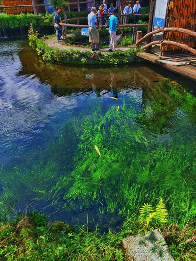 Japan Yamanashi Fujiyoshida Oshinohakkai Photography Pond Transparency Fish Tourist Spot 山梨県 忍野八海