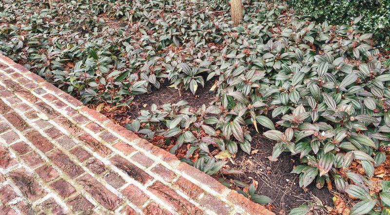 Plant Brick Wall Green Nature Urban Urban Garden Simplicity Urban Nature Urban Spring Fever EyeEm Best Shots Eye4photography  Ladyphotographerofthemonth