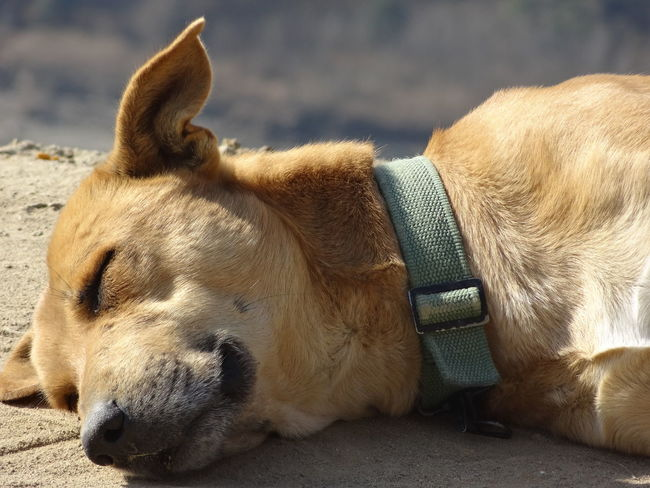Animal Themes Canine Close-up Day Dog Domestic Animals Mammal Nature No People One Animal Outdoors Pets Sleeping