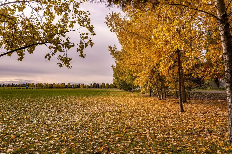 Leading lines Photography416 Tree Plant Beauty In Nature Growth Sky Nature Tranquility Scenics - Nature Field Tranquil Scene Land No People Outdoors Park Landscape Autumn Environment Leaf Plant Part Grass