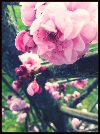my photography Photography Taking Photos EyeEm Nature Lover Flower#garden#nature#ecuador#santodomingoecuador#eyeEmfollowers#iphoneonly#nofiltrer#macro_garden#pretty#beautiful#followme#sho