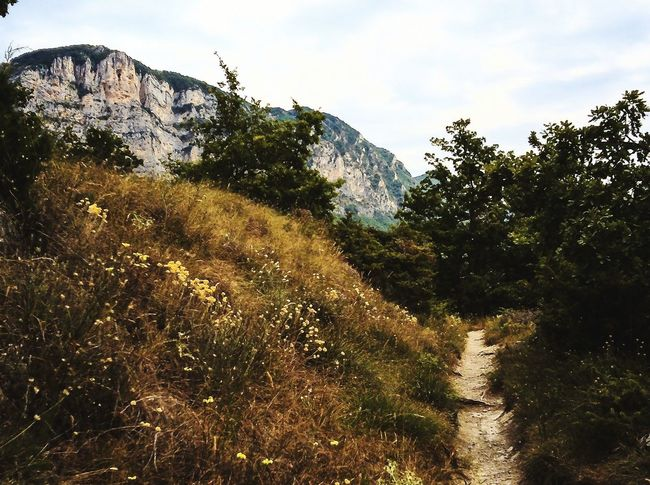 Drôme #provence #Mountain #montagnes #Nature  Tree Agriculture Sky Cloud - Sky