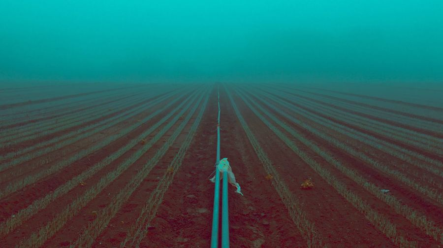 Foggy Morning. Green agriculture. Artistic Foggy Landscape Pfalz EyeEm Best Shots Arts Colorsplash Agriculture Nature Land No People High Angle View Outdoors Diminishing Perspective Landscape Pattern Scenics - Nature Field Beauty In Nature Environment Field Tranquility Tranquil Scene