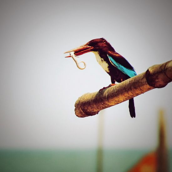 Kingfisher First Eyeem Photo Hunter