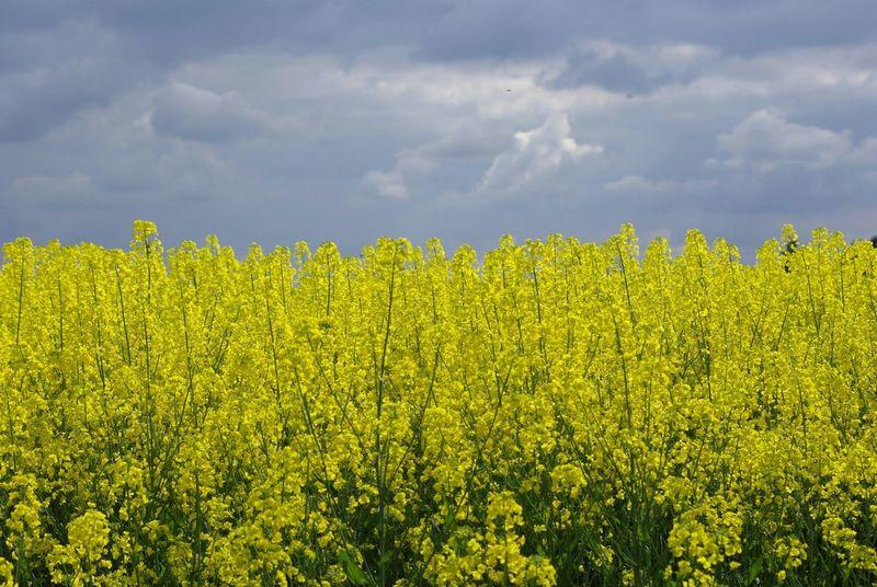 Mellow Yellow Spring Report Go Green Deux-Sèvres