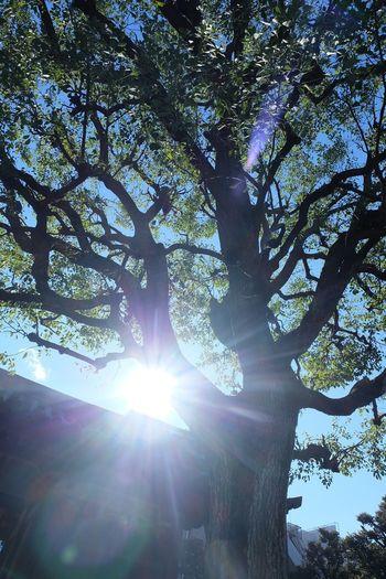光 Shine Nature Beauty In Nature 木 宝仙寺 Tree