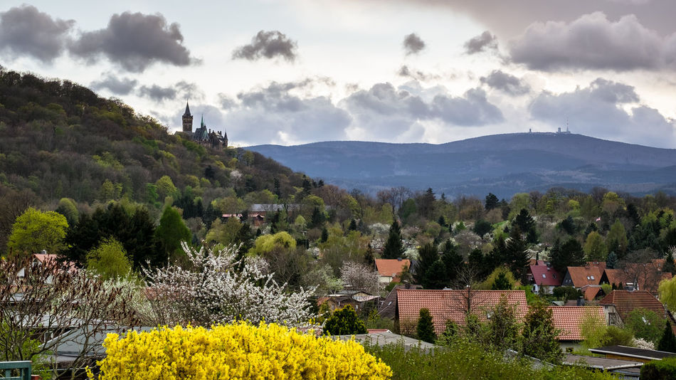 Castle Schloss Wernigerode Architecture Beauty In Nature Building Building Exterior Built Structure Cloud - Sky Day Environment Flower Flowering Plant Growth Landscape Mountain Nature No People Outdoors Plant Scenics - Nature Sky Springtime Tree