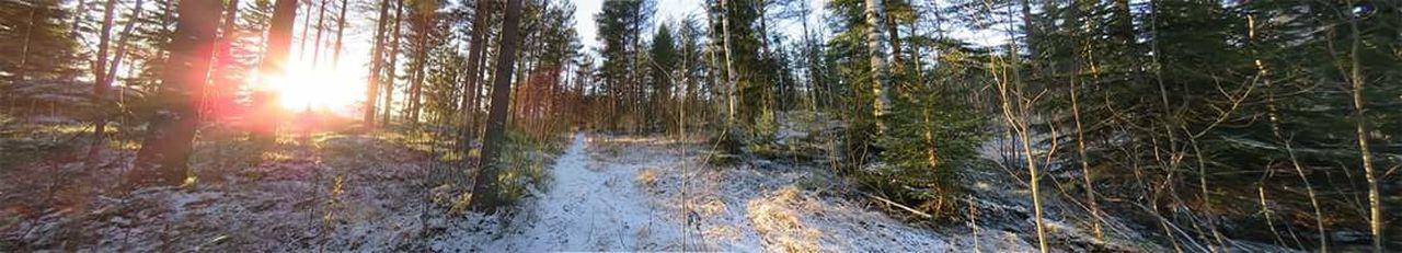 Forest Winter Finland Hyvinkää