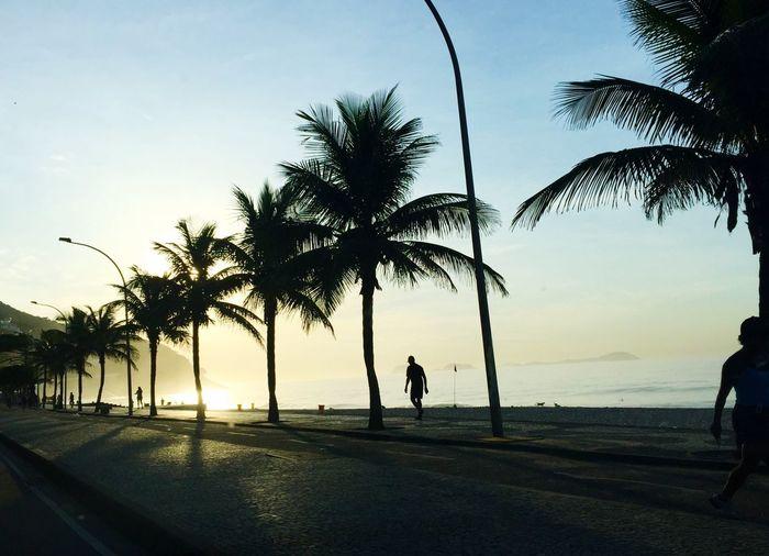 Silhouette palm trees on promenade against sky at sao conrado