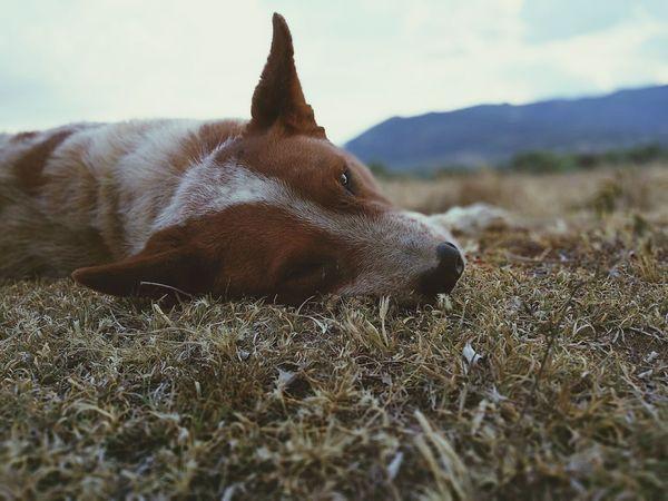 El perro esta disfrutando la vida