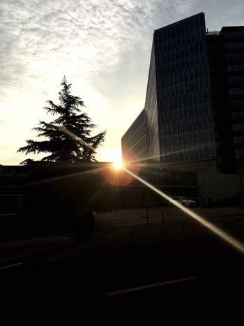太陽の光がいつも心を温かくしてくれる。 EyeEm Life Sunset Sunshine Warm 希望 Present Nature