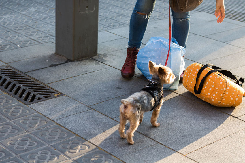 Dog Pets Low Section Domestic Animals One Animal Mammal Human Leg Outdoors Shoe Day Real People Standing Men One Person Human Body Part Dog Lead Barcelona Perros De Barcelona Dogs Of Barcelona Only Men Portrait Of A City Pet Portraits