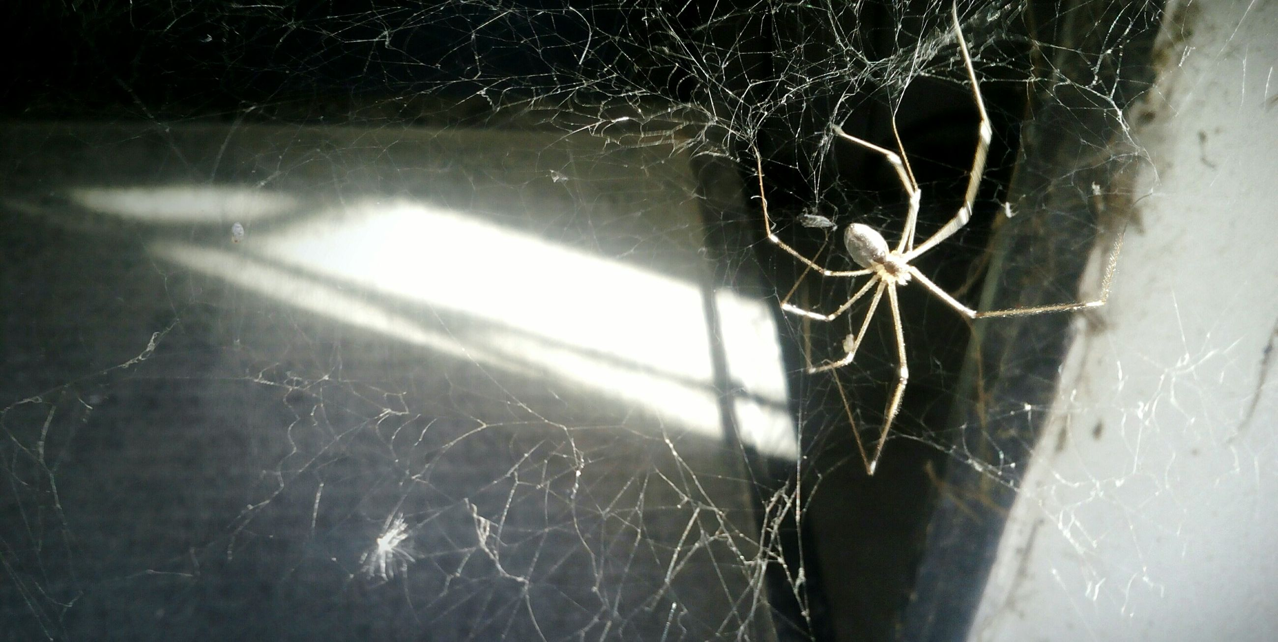 spider web, close-up, spider, one animal, sunlight, nature, insect, no people, animals in the wild, day, animal themes, outdoors, web, beauty in nature, fragility, survival