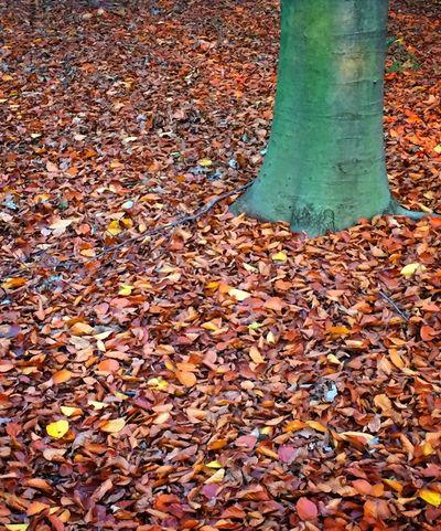 Trees Tree Autumn Autumn🍁🍁🍁 Atumn Fall Leaves Fall Autumn Colors Autumn Leaves Autumn Collection