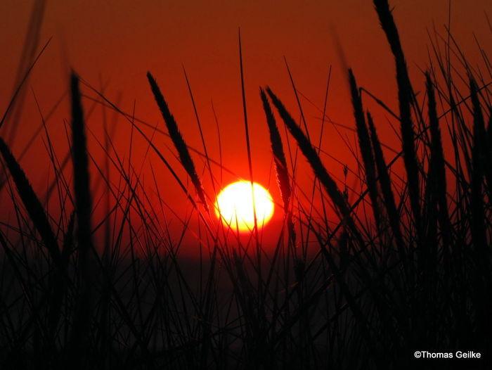 Silhouette plants against orange sky during sunset