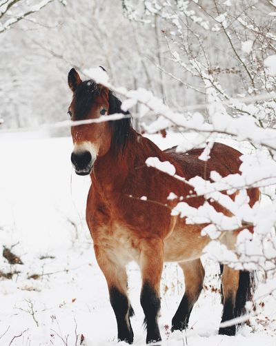 Moments of connection Winter Wonderland Horses Horse Domestic Animals Animal Themes One Animal Mammal Snow Pets Winter Nature No People Cold Temperature Day