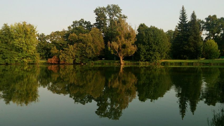 Early autumn reflection Landscape Waterfront Tree Water Symmetry Lake Reflection Sky Reflecting Pool Standing Water Countryside Calm Mirror Scenics Reflection Lake Idyllic