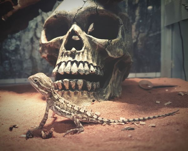 At the pet store Petstore Lizard Zoophotography Animal Photography