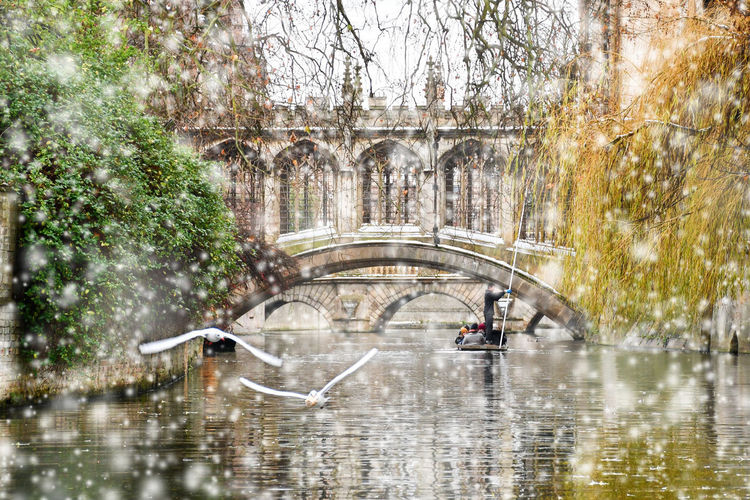 Digital composite image of birds flying over canal in city