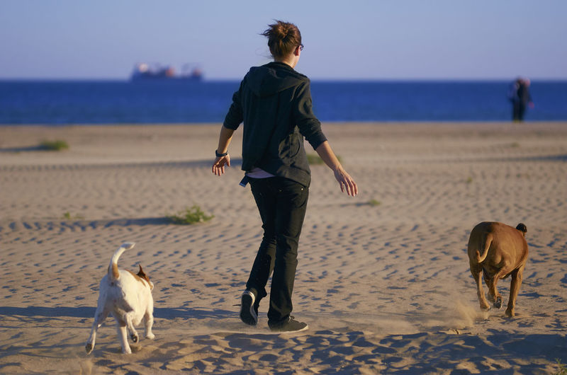 Woman walking with dogs at beach against blue sky