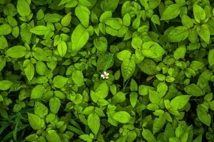 High angle view of green plant on field