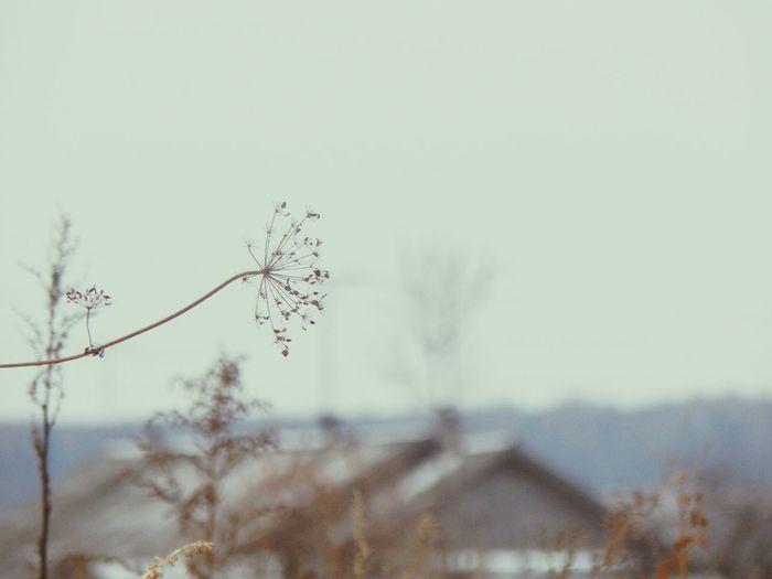 November 2014 Nature ноябрь