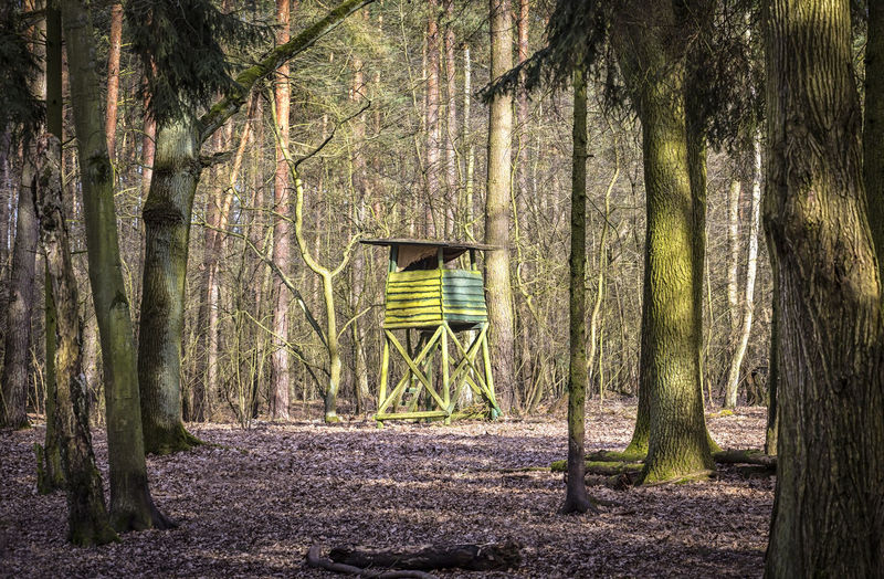 Hunting Seat in the forest. Ansitz Beauty In Nature Day Forest Hochsitz Hunting Jagd Landscape Lichtung Nature No People Outdoors Seat Tranquility Tree Tree Trunk Wald Wood Wood - Material