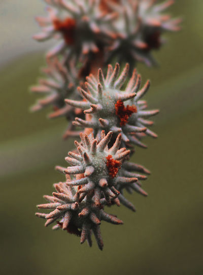 Close-up of a plant