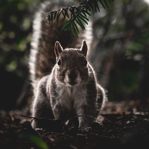 Park Wildlife & Nature Squirrel Ground Little Animals Mammal Animal Animal Themes One Animal Animal Wildlife Tree Vertebrate Animals In The Wild No People Day Land Looking At Camera Portrait Sitting Domestic Animals Domestic Focus On Foreground