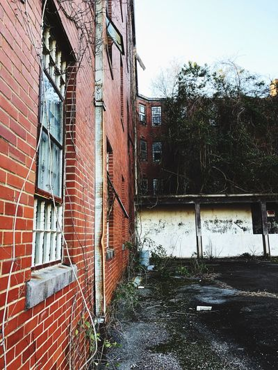 Vines Brick Window Old Buildings Rotting Creepy Architecture Building Exterior Built Structure No People Day Outdoors Abandoned Tree Sky