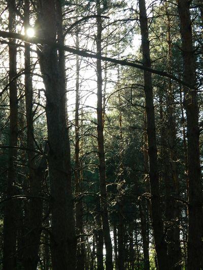 люблю лес <3