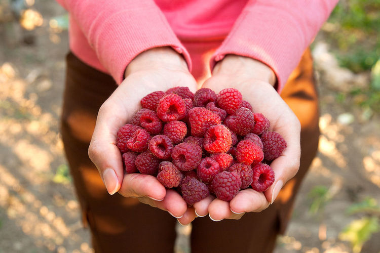 Close-Up Of Hand Holding Raspberries