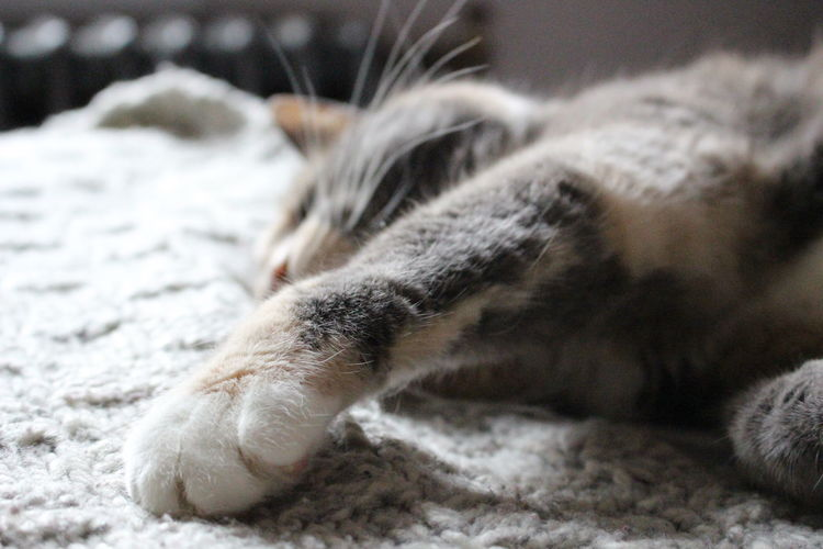 Misty! Mammal Animal Cat Animal Themes Feline Domestic Cat Domestic Domestic Animals Pets One Animal Vertebrate Relaxation No People Close-up Animal Body Part Focus On Foreground Indoors  Resting Lying Down Paw Whisker Animal Leg