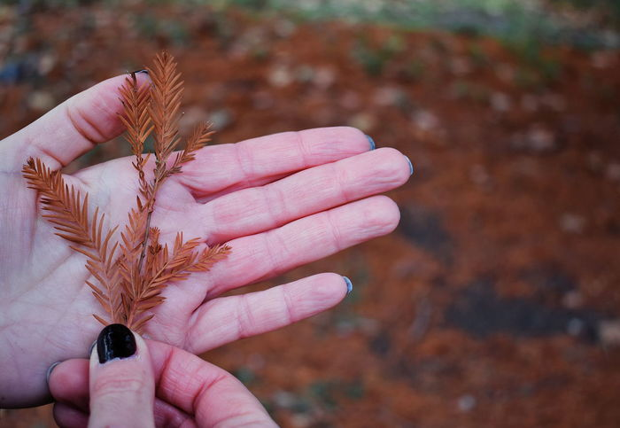 Human Hand Human Body Part Human Finger One Person Day Nail Polish Fingernail Day Out Brown Color Leaves Nature Park London Autumn Autumn Colors Leaves On The Ground