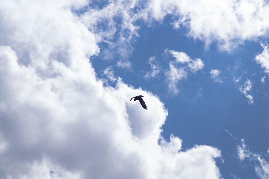 Bird Flying High Blue Cloud - Sky Day Flying No People Scenics Sky
