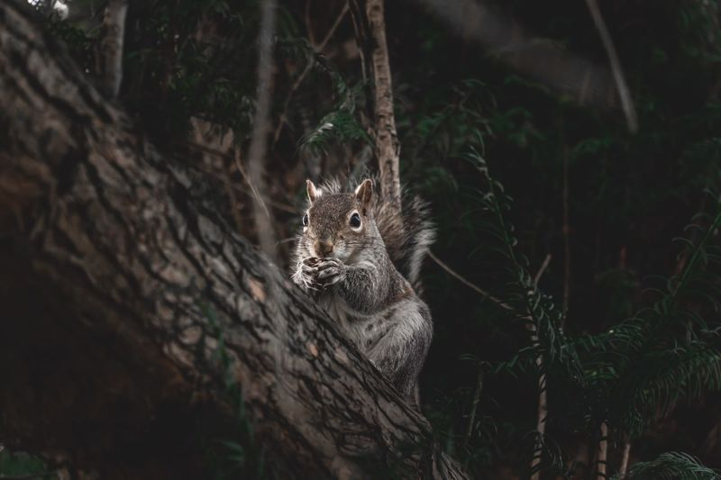 Sweet Nuts Summer Hungry Spring Eating Outdoors Park Nut Adorable Fluffy Squirrel Animal Animal Themes One Animal Mammal Animal Wildlife Animals In The Wild Vertebrate Nature No People