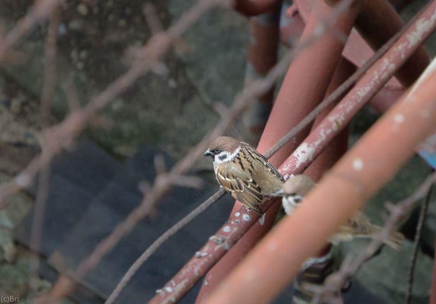 One Animal Animals In The Wild Outdoors Animal Wildlife birding