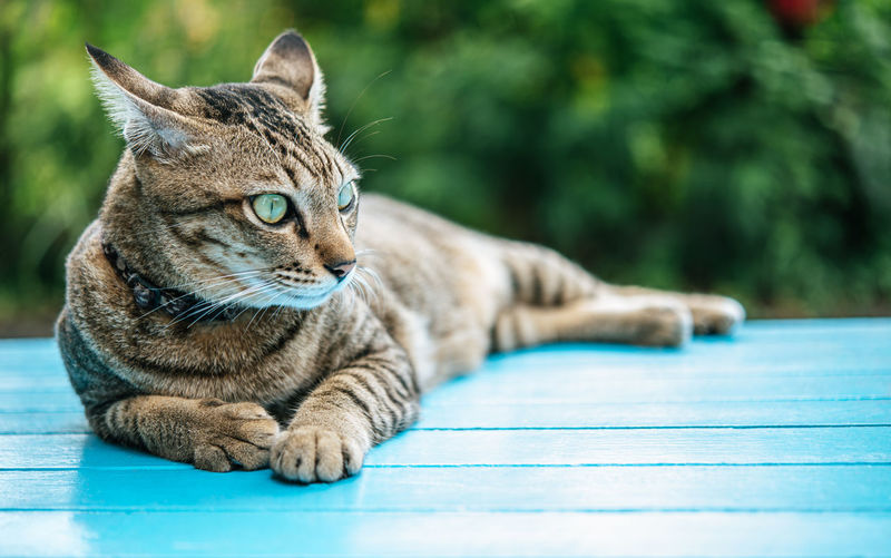 Close-up of tabby cat sitting on table against plants outdoors