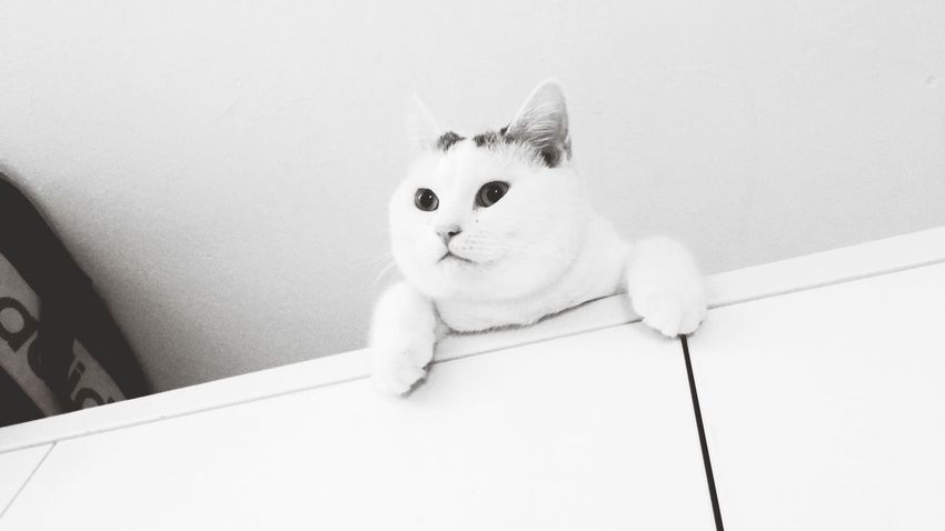 EyeEm Selects cat Cute Domestic Cat Pets Indoors  Portrait Domestic Animals Looking At Camera Sitting Feline No People One Animal Home Interior Animal Themes Protruding Making A Face Day Close-up Mammal Cat Snapshot Daily Shooting Cute