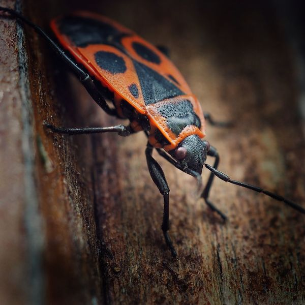 bug Macro Macro Photography Insect Photography Macro Beauty Full Length Animal Themes Animal Antenna Insect Bug Beetle
