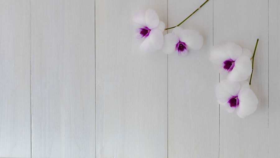 Close-up of pink flowering plant against white wall