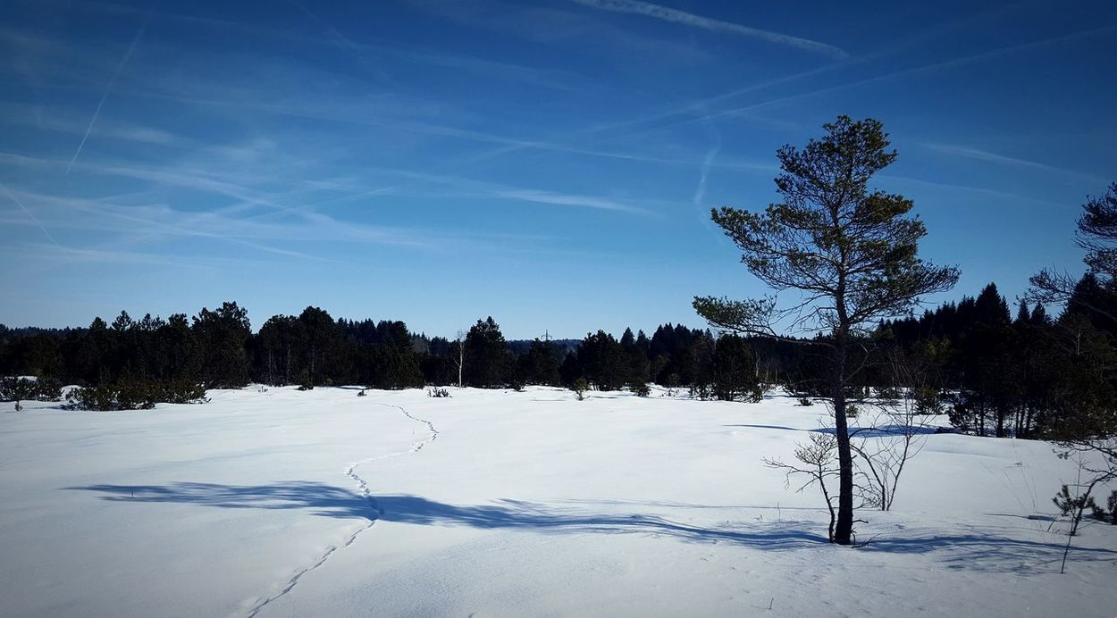Tree Blue Landscape No People Nature Sky Outdoors Snow Beauty In Nature Tree Area Day Winter Germany Sachsenkam