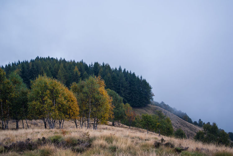 Trees on hill in autumn