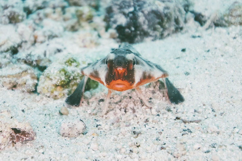 One Animal Animal Themes Animal Animal Wildlife Animals In The Wild Nature Sea No People Day Underwater Outdoors Sea Life Close-up Marine Vertebrate Water Focus On Foreground Zoology Fish Land